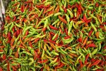 Hot chillie peppers in the Luang Prabang market.