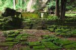 Moss growth at Wat Phu