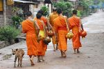 Monks heading home after their morning alms collection.
